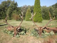 Poľovačka jeleň